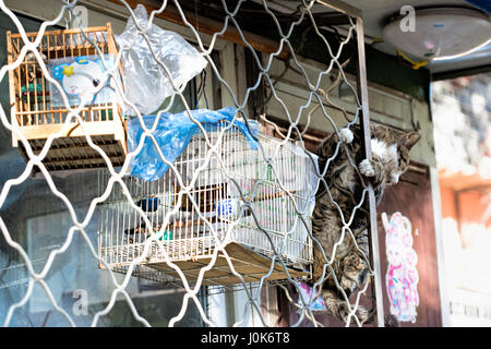 Cat climbing to bird in cages, Beijing, China - Stock Photo