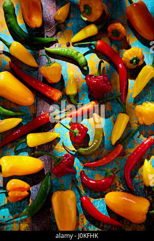 Green, red, yellow and orange peppers on blue background - Stock Photo