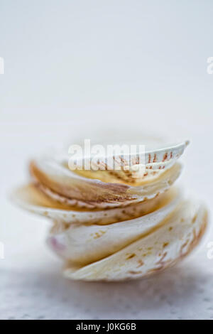 Seashells stacked on white surface - Stock Photo