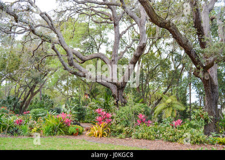 A beautiful garden and landscape at Mead Botanical Gardens in Winter Park, Orlando, Orange County, Florida. - Stock Photo