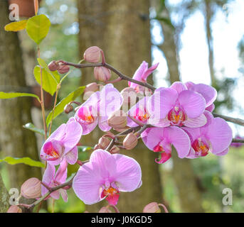 A beautiful Pink Orchid at Mead Botanical Garden in Winter Park Orlando, Florida - Stock Photo
