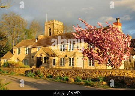 Cotswold house with blooming tree - Stock Photo