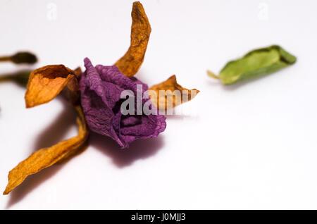 Dry Tiny Flower - Stock Photo