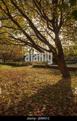 autumn dappled light through trees leaves on the ground - Stock Photo