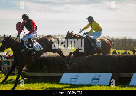Horseheath Point to Point - Stock Photo