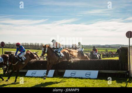 Horseheath Point to Point - Stock Photo