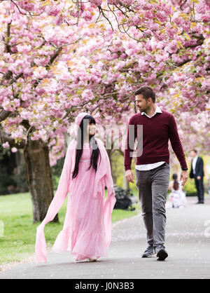 London, UK. 14th April 2017. People enjoy the cherry blossom in Greenwich Park, in south east London today. The - Stock Photo