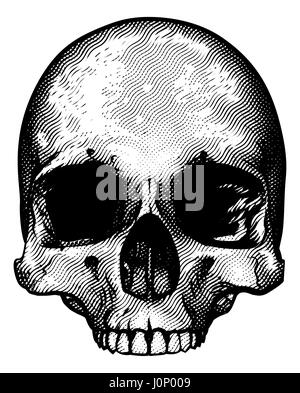 Skull in a vintage retro hand drawn woodcut etched or engraved style - Stock Photo