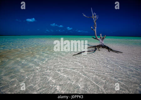 A dead tree sits perfectly in a pristine shoreline of the Caribbean - Stock Photo