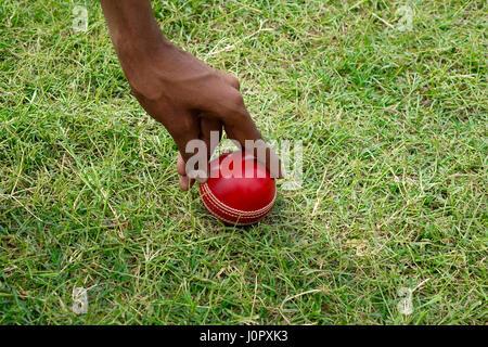 Hand picking Cricket ball - Stock Photo