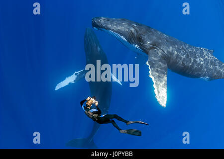 Humpback Whale and Underwater Photographer, Megaptera novaeangliae, Hawaii, USA - Stock Photo