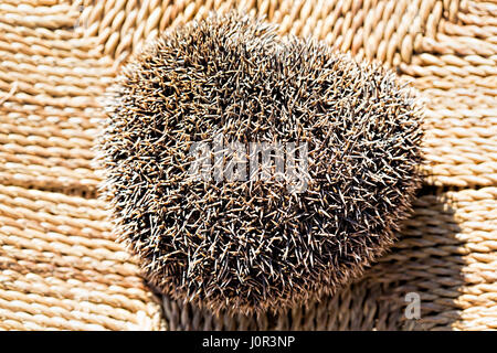 Closed hedgehog on the chair - Stock Photo