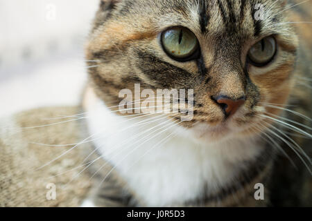 Female tabby cat resting by a window; macro close-up shot - Stock Photo
