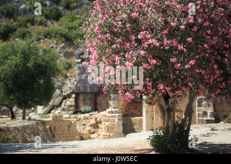 Horisontal shot of blooming rododendron tree in sharp focus and ancient necropolis blurred in ancient and archeological - Stock Photo