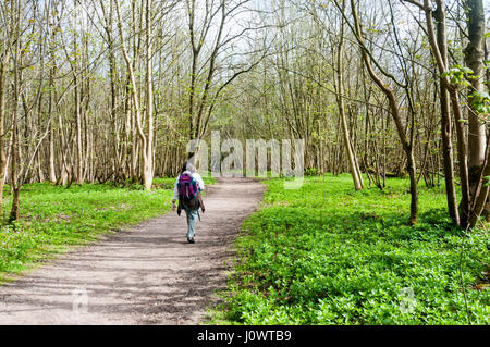 Woman walking at Gatton Park on the North Downs in Surrey. - Stock Photo