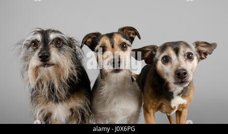 Dogs, UK. - Stock Photo