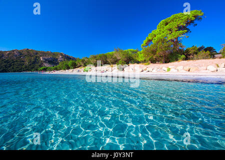 Santa Giulia sandy beach with pine trees and azure clear water, Corsica, France, Europe - Stock Photo