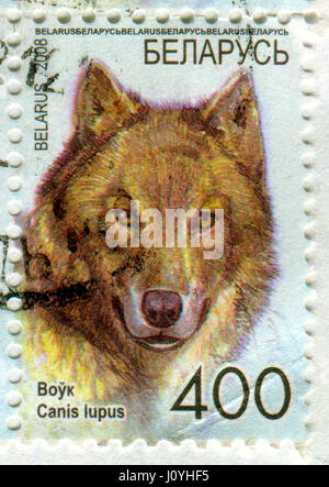 GOMEL, BELARUS, APRIL 15, 2017. Stamp printed in Belarus shows image of  The gray wolf or grey wolf (Canis lupus), - Stock Photo