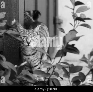 Twin cats living in South Fremantle, Australia - Stock Photo