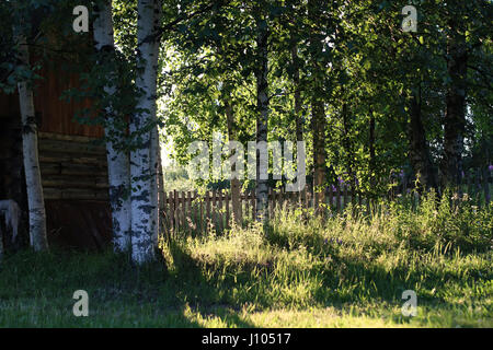 birch and grass on sunset countryside  - Stock Photo