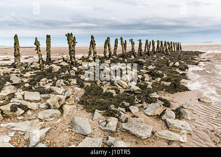 Eroded rotting wood from old pilings perhaps used for fish salmon and elver pucher traps at Goldcliff on the Gwent - Stock Photo