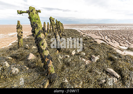 Eroded rotting wood from old pilings at Goldcliff on the Gwent Levels, Wales, UK - Stock Photo