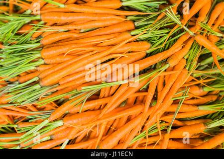 Baby Carrots. Fresh organic carrots. Background texture of carrots. - Stock Photo