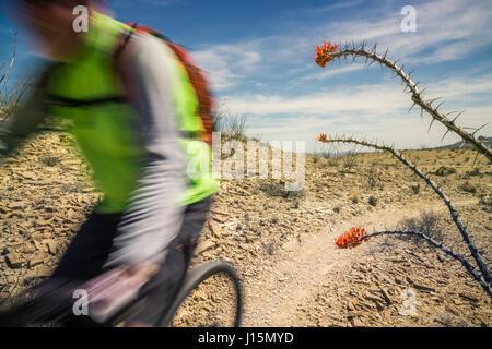 Mountain biking on the Lajitas trails, Big Bend area, Texas. - Stock Photo