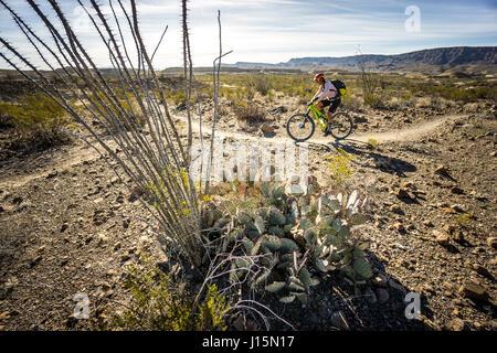 Mountain biking in Big Bend Ranch State Park, Lajitas, Texas. - Stock Photo