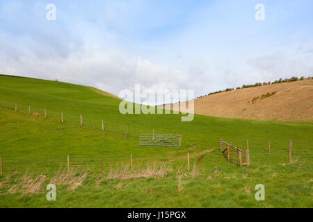 rolling lush green meadows with gates and fencing in the yorkshire wolds under a blue cloudy sky in springtime - Stock Photo