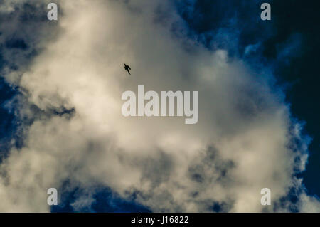 Bird is a silhouette against the sky background - Stock Photo