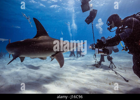 THE BAHAMAS, CARRIBEAN SEA: A SHARK scrum of brave deep sea photographers all vying for the perfect shot of these - Stock Photo