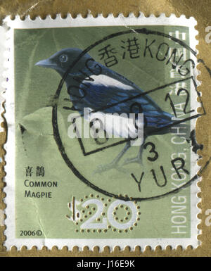 GOMEL, BELARUS, APRIL 18, 2017. Stamp printed in Hong Kong, China shows image of  The Common Magpie, circa 2006. - Stock Photo
