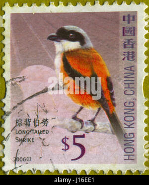GOMEL, BELARUS, APRIL 18, 2017. Stamp printed in Hong Kong, China shows image of  The Long-tailed Shrike, circa - Stock Photo