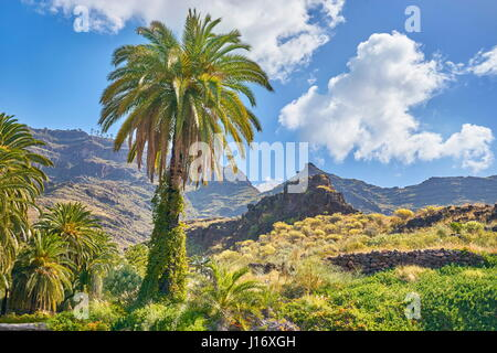 Canarian landscape with palm tree, Gran Canaria, Spain - Stock Photo