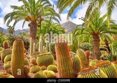 Cactus Garden, Gran Canaria, Spain - Stock Photo