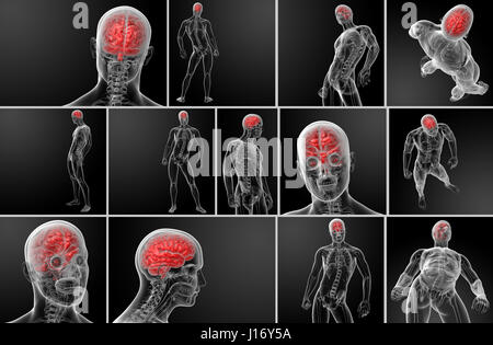 3d rendering human brain X ray - Stock Photo