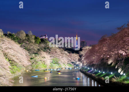 Night view of massive cherry blossoming with Tokyo tower as background. Photoed at Chidorigafuchi, Tokyo, Japan. - Stock Photo
