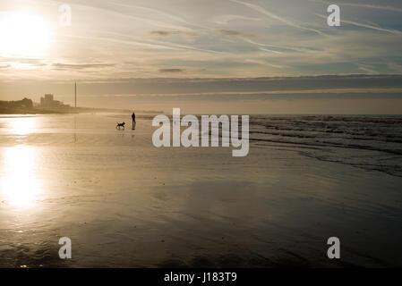 Man walking dogs on empty beach, early morning, Brighton - Stock Photo