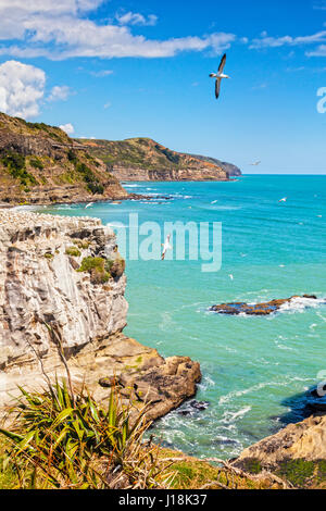 Muriwai Gannet Colony, Auckland, New Zealand. Focus on foreground. - Stock Photo