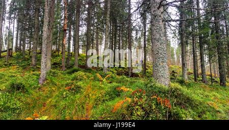 Forest by Oslo - Stock Photo