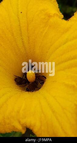 bees hardwork - Stock Photo