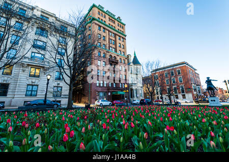 View of Downtown Mount Vernon, baltimore maryand shot from the Tulip Garden in spring - Stock Photo