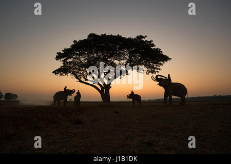 Thai Silhouette elephants on the field and tree sunrise background. - Stock Photo