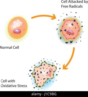 Oxidative stress of a healthy cell caused by an attack of free radicals - Stock Photo