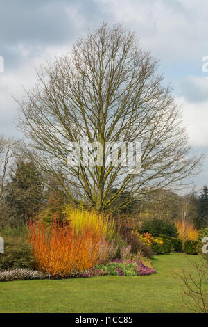 Spring at Harlow Carr Garden - Stock Photo