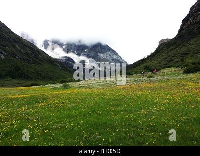 Luorong Farm of Daocheng County,Sichuan province,China - Stock Photo