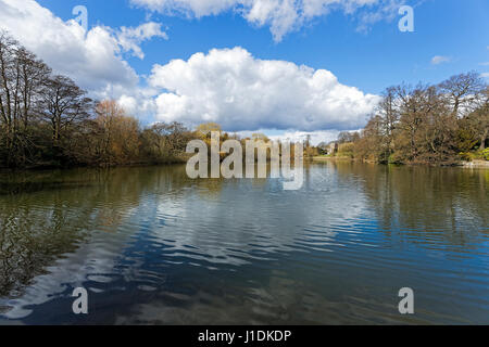 A bright spring morning and white clouds, blue sky and the bare trees lining the banks of a lake are reflected on - Stock Photo