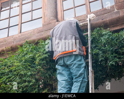 Man on the stairs cuts climbing plant leaves - Stock Photo