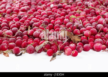 it is a lot of scattered frozen cowberry berries - Stock Photo